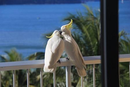 Hamilton-Island-Queensland-450x300